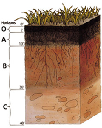soil profile showing humus layer