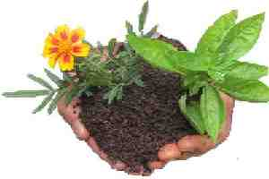 growing flowers and vegetables in worm compost